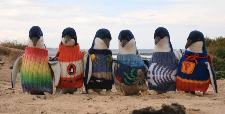 Penguin sweaters worn by stuffed toys at Phillip Island - IMAGE: PINP/AAT KINGS/SPOTLIGHT/REX FEATURES